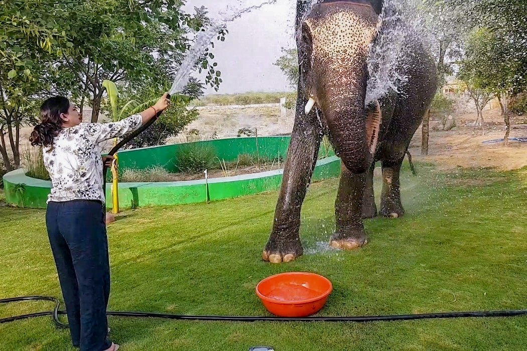 Elefantastic Elephant Sanctuary in Jaipur, India